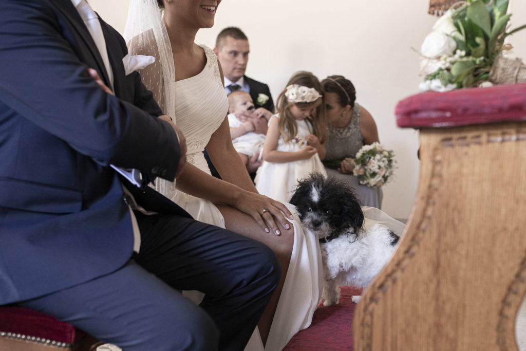 cute dog at the ceremony